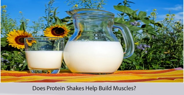 Does Protein Shakes Help Build Muscles