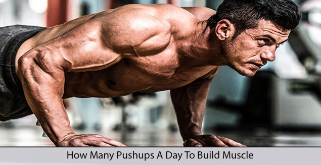 how many pushups a day to build muscle?