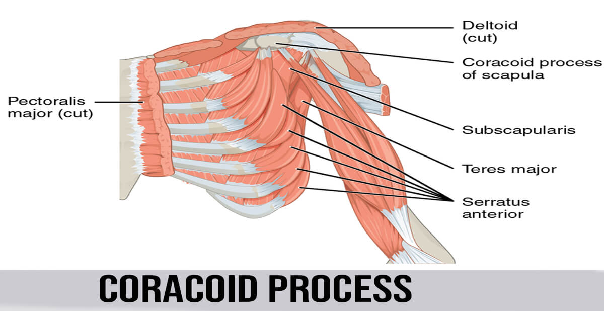 coracoid process